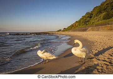 Beach in Niechorze