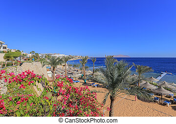 Sharm El Sheikh - Beach in Sharm El Sheikh resort in Egypt