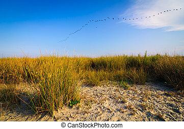 Beach landscape danube delta