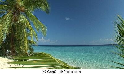beach loop - Amazing view of beach ? sealessly loopable