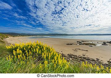 Beach near Curio Bay in the South New Zealand - Porpoise Bay...