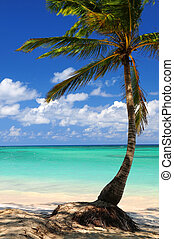Beach of a tropical island - Sandy beach of a tropical...