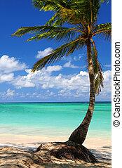Beach of a tropical island - Sandy beach of a tropical...