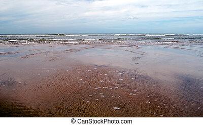 Beach of Conil