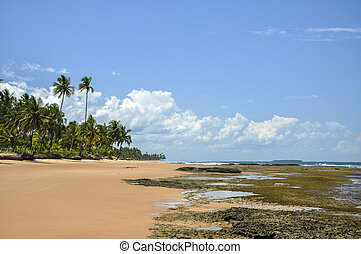 Beach of Taipu de Fora (Bahia, Brazil)