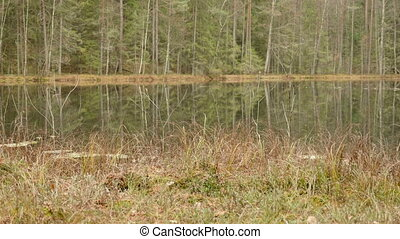 Beach of the Lake in the Forest. Autumn daytime. Smooth dolly shot