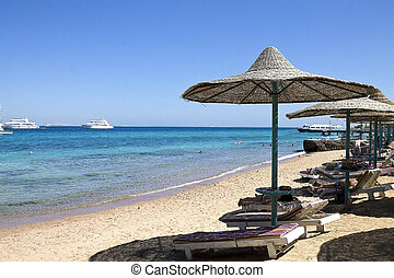 beach on the Red Sea in Egypt