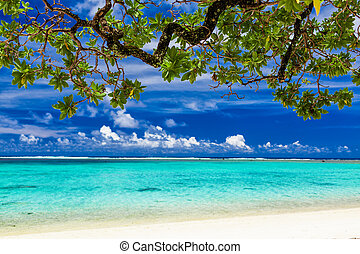 Beach on tropical island during sunny day framed by a tree with green leaves