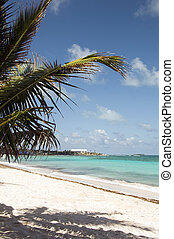 beach palm tree San Luis Andres Island Colombia South...