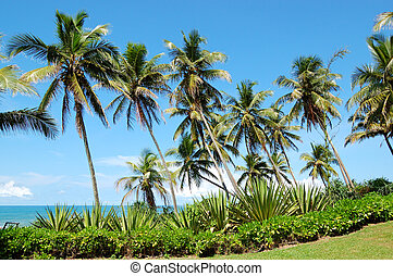 Beach, palms and turquoise water of Indian Ocean, Bentota, Sri Lanka