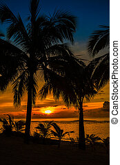 Beach palms sihouetted and sunset, Rarotonga, Cook Islands