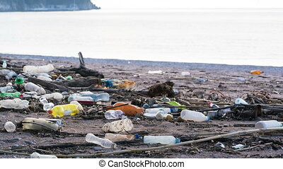 beach polluted with plastic bottles, time lapse