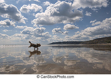 A dog runs across a very reflective beach at Charmouth in Dorset, England