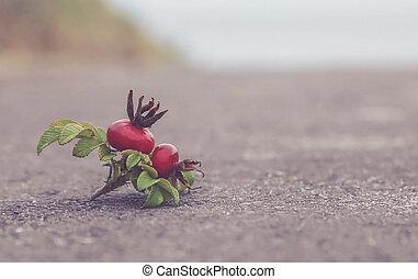 Beach rose near seabeach as vintage touch