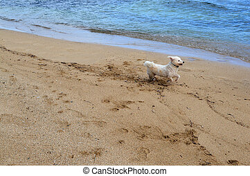 Beach Running Dog - This is a photo of a dog running on the...