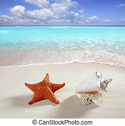 beach sand pearl necklace shell starfish summer - beach sand...