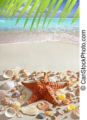 beach sand starfish caribbean tropical sea
