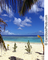 Beach Scene - plants on beach