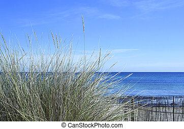 Beach scene with reeds