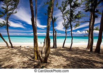 Shady trees forground this beautiful ocean scenic. Shot in Oahu, Hawaii.