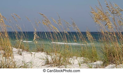 Beach Sea Oats Seagulls - Sea oats blow in the wind on the...