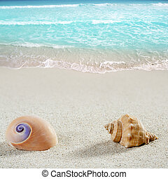 beach sea snail shell tropical white sand closeup