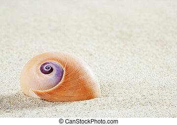 beach sea snail tropical white sand closeup macro - beach...