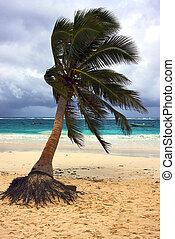 seaweed and coastline in playa paradiso mexico