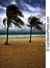 beach seaweed and coastline in playa paradiso