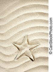 beach starfish print white caribbean sand summer - beach...