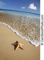 Beach Starfish - Starfish on tropical beach with waving...