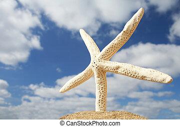 Beach Starfish - White starfish on the beach with dramatic...