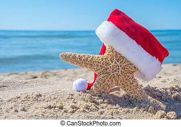 beach starfish with Christmas hat