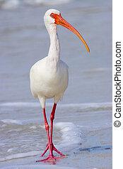 Beach stroller - White Ibis