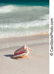 close up of seashell on tropical beach