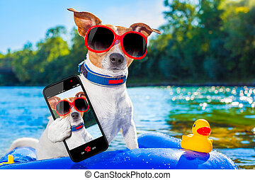 jack russell dog sitting on an inflatable mattress in water by the sea, river or lake in summer holiday vacation , taking a selfie