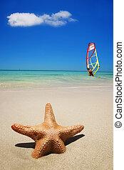 Beach Summer Scene - Starfish on the beach with windsurfer