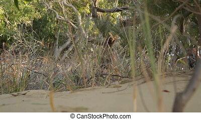 Beach Trees And Grass, Qld Island, Australia