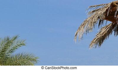 Beach umbrella and palm against blue sky