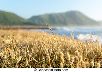 Beach vegetation selective focus grasses with blurry landscape background