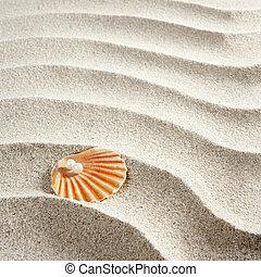 beach white sand pearl shell clam macro