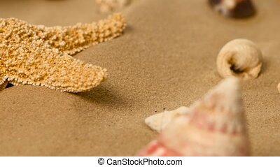 Beach with a lot of seashells and starfish, rotation, closeup