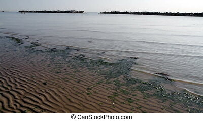 Beach with algae and low tide