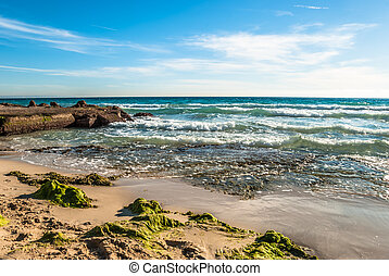 Tranquil beach with algas on a coast in Majorca on a stormy day and blue sky in background