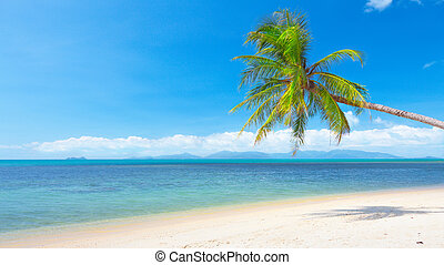 beach with coconut palm and sea. 16x9 wide-screen aspect...