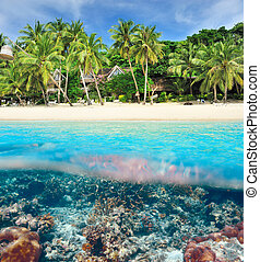 Beach with coral reef underwater view - Beautiful beach with...
