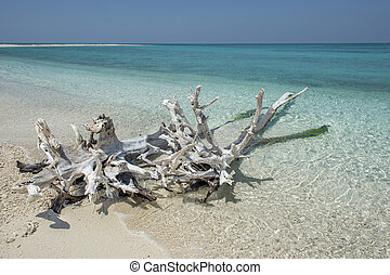 Close-up image of a Beach with driftwood