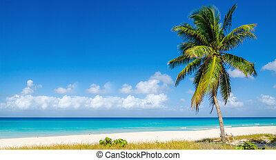 Beach with beautiful high palm tree, Caribbean Islands