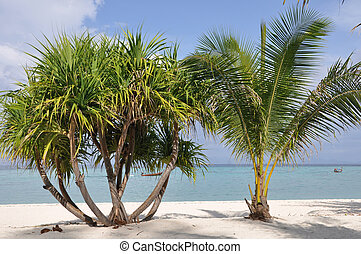 Beach with palm trees and sand