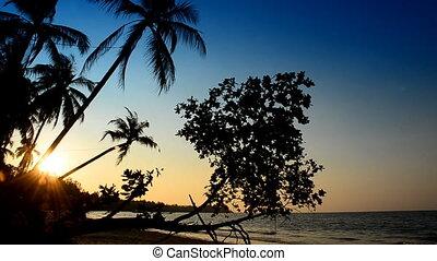 Beach with palms